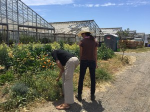 A farmer at a small urban farm in Richmond, CA, showing my internship supervisor, Dr. Philip Stark, mustard greens growing abundantly on her land.
